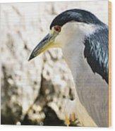 A Black-crowned Night Heron  Wood Print