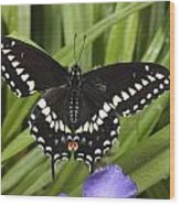 A Black Swallowtail Butterfly, Papilio Wood Print by George Grall