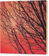 A Black Winter Tree On Red Wood Print