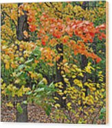 A Blustery Autumn Day Wood Print