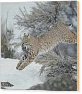 A Bobcat Leaps With A Horned Lark Wood Print