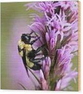 A Bombus Bumblebee On A Wood Print