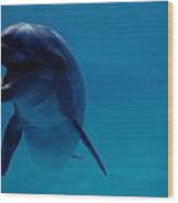 A Bottlenose Dolphin Swims In The Blue Wood Print
