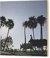 A Boy Rides On An Ox-drawn Cart Wood Print