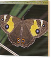 A Brightly Colored Brown And Yellow Wood Print
