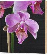 A Brilliant Orchid Wood Print