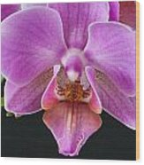 A Brilliant Orchid II Wood Print