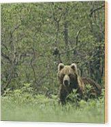 A Brown Bear In Tall Grasses Wood Print