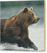 A Brown Bear Rushing Through Water Wood Print