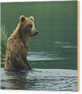 A Brown Bear Standing In Water Hunting Wood Print
