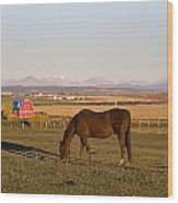 A Brown Horse Grazing In A Field In Wood Print by Michael Interisano