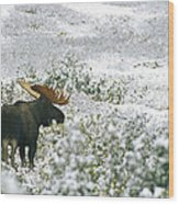 A Bull Moose On A Snow Covered Hillside Wood Print