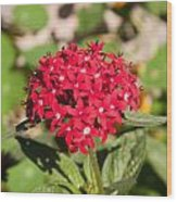 A Bunch Of Small Red Flowers Wood Print