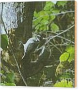 A Busy Woodpecker  Wood Print
