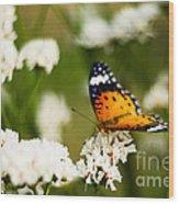 A Butterfly Affair Wood Print