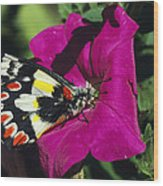 A Butterfly Lands On A Pink Flower Wood Print