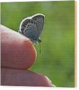 A Butterfly On The Finger Wood Print