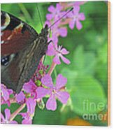 A Butterfly On The Pink Flower 2 Wood Print