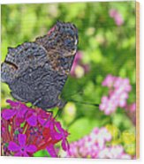 A Butterfly On The Pink Flower Wood Print