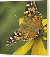 A Butterfly Sits Atop A Yellow Wood Print