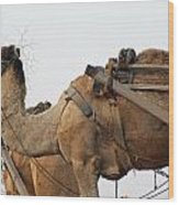 A Camel Foraging For Food In A Desert Environment Wood Print