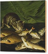 A Cat With Trout Perch And Carp On A Ledge Wood Print