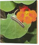 A Caterpillar Eating The Leaves Of A Plant With A Beautiful Orange Flower Wood Print