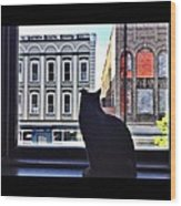 A Cat's View Wood Print by Joan Meyland