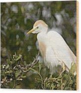 A Cattle Egret Bubulcus Ibis Wood Print