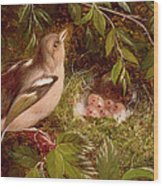 A Chaffinch At Its Nest Wood Print