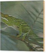 A Chameleon With Yellow Eyes Balances Wood Print
