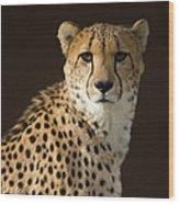 A Cheetah Acinonyx Jubatus Urinates Wood Print