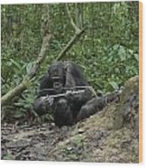 A Chimp At A Termite Mound Fishing Wood Print by Ian Nichols