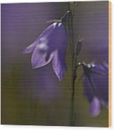 A Close-up Image Of Mountain Hairbells Wood Print