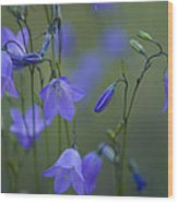 A Close Up Of Mountain Hairbells Dietes Wood Print
