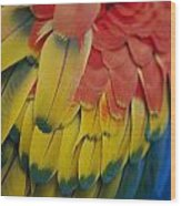 A Close-up View Of A Parrots Rainbow Wood Print