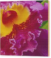 A Close View Of A Bright Pink Cattleya Wood Print by Jonathan Blair