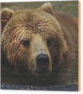 A Close View Of A Captive Kodiak Bear Wood Print