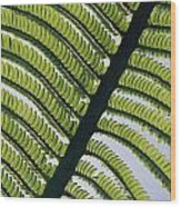 A Close View Of A Fern Wood Print