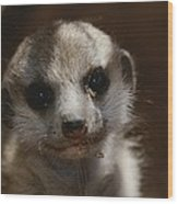 A Close View Of A Meerkat Suricata Wood Print