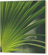 A Close View Of A Palm Frond Wood Print