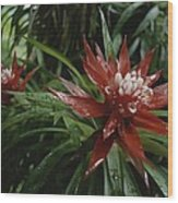 A Close View Of A Tropical, Red Flower Wood Print