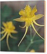 A Close View Of A Yellow Columbine Wood Print