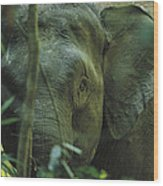 A Close View Of An Asian Elephant Wood Print