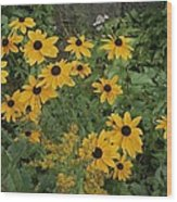 A Close View Of Black-eyed Susans Wood Print