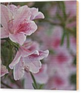 A Close View Of Pink Azalea Blossoms Wood Print