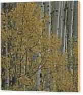 A Close View Of Quaking Aspen Trees Wood Print