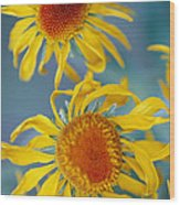 A Close View Of Two Daisies Wood Print