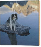 A Collie Perches Itself On A Rock Wood Print