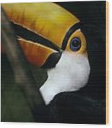 A Colorful Toco Toucans Blue Eye Wood Print